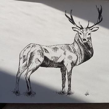 Zwarte inkt pen tekening hert